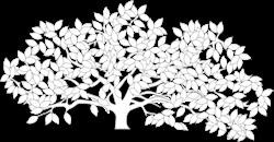 Sarah Pearson : Century Tree Land Sales