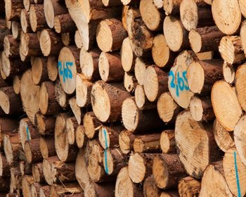 "Know Your Numbers: Does Your Timber or Wood Market ""Balance""?"