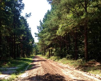 Mississippi Plantation Intensively Managed for Timber and Wildlife