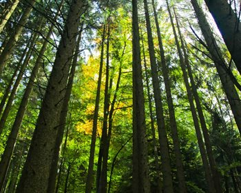 Smart Timber Harvesting on a Property Requires Planning