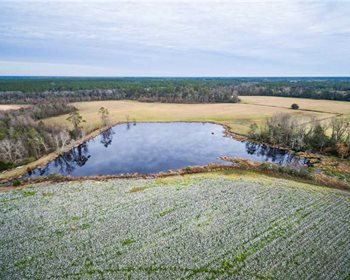 South Georgia Farm Offers Multiple Streams of Income