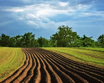 Strategies for Successfully Leasing Your Farmland