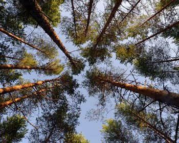 Thinking Beyond Deviations in the Forest Products Industry