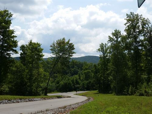 Partially Cleared Building Lot : New Tazewell : Claiborne County : Tennessee