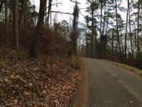 Wooded Foreclosure Lot