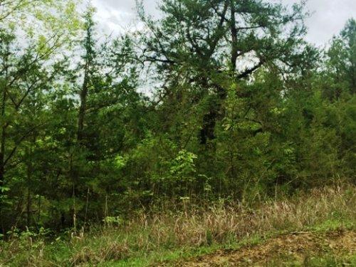 20 Acres Close To Noxubee Refuge : Starkville : Oktibbeha County : Mississippi