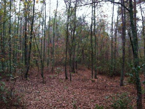 Berea Road Tract : Smoaks : Colleton County : South Carolina