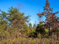 4.95 Acre Tract In Cherokee County