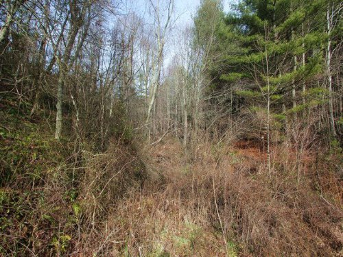 Small Acreage Wooded Tract In : Independence : Grayson County : Virginia