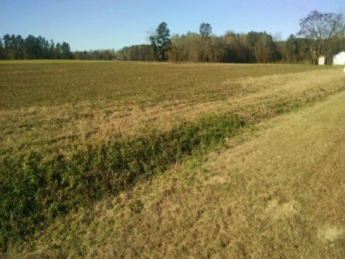 Nice Cleared Homesite : Fairmont : Robeson County : North Carolina