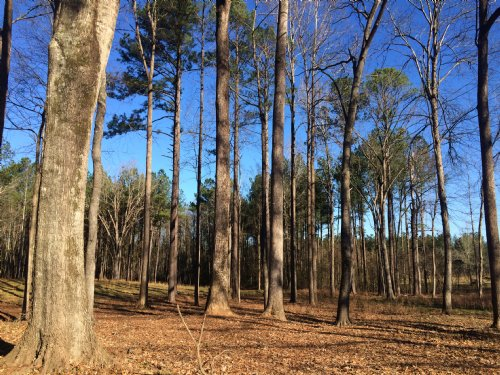 Little Creek Preserve : Gray : Jones County : Georgia