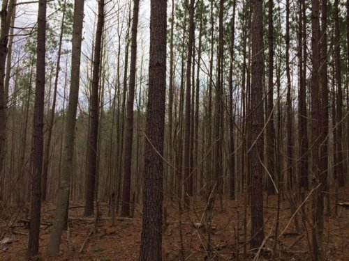 5.5+/- Acres Owner Financing : South Pittsburg : Marion County : Tennessee