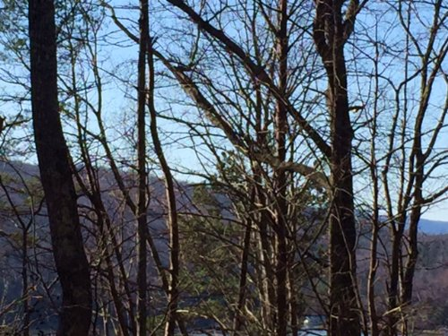 5.18+/- Acres Lakeview : Guild : Marion County : Tennessee