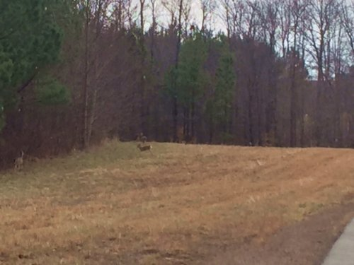 6.00+/- Acres In The Ridges : South Pittsburg : Marion County : Tennessee