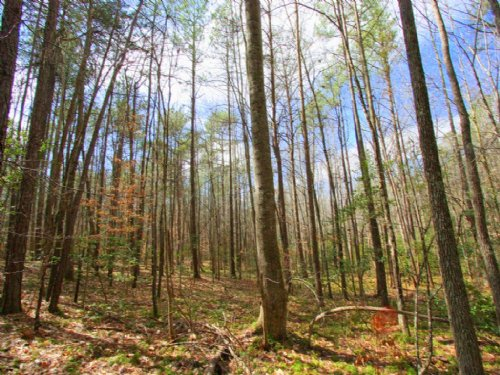 Gorgeous 13.5 Acre Lot : Ruther Glen : Caroline County : Virginia