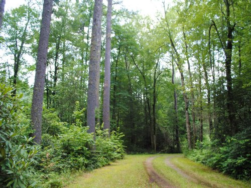 Beaumont Dr Lot #10, Cedar Mountain : Cedar Mountain : Transylvania County : North Carolina