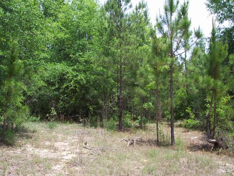 3 to 4 plus Acre Lots : Soperton : Treutlen County : Georgia