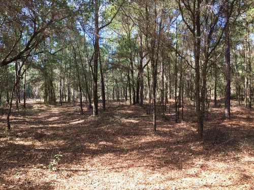 10.8± Ac Residential / Undeveloped : Dunnellon : Marion County : Florida