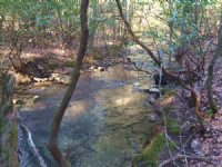 4.98+/- Acres With Year Round Creek