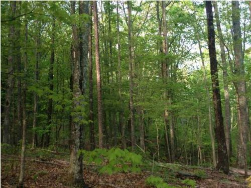 15+/- Acres Near Cumberland State : Sale Creek : Hamilton County : Tennessee