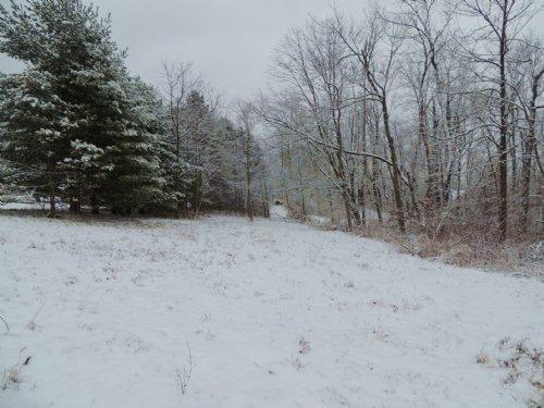 Plum Rd - 10 Acres : Kimbolton : Guernsey County : Ohio