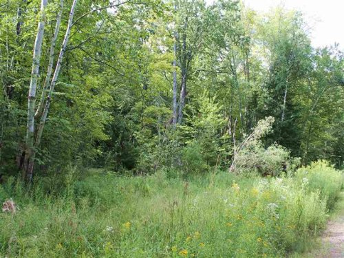 Parcel 4 Forest Dr., 1101726 : Skanee : Baraga County : Michigan