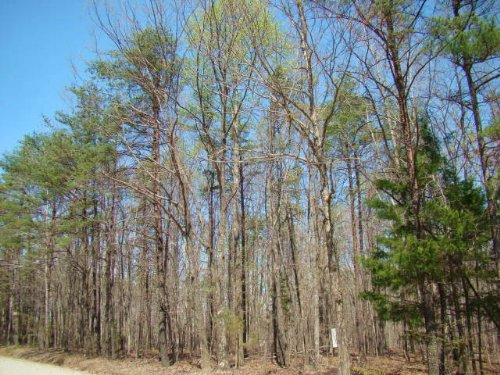 Friendly Acres Find : Buckingham : Virginia