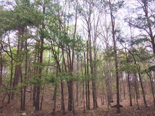 10.17 +/- Wooded Acres, Ranger : Ranger : Gordon County : Georgia