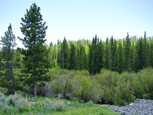 Beaver Creek Estates - Price Reduce : Atlantic City : Fremont County : Wyoming