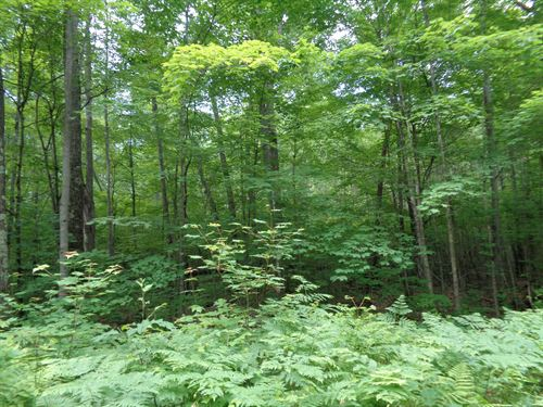 Mls 156645 - On Plummer Lk Ln S : Lac Du Flambeau : Vilas County : Wisconsin