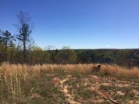 17.07+/- Acres Bluff View Property