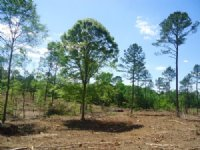 5 Acres Wooded,  $1k Down