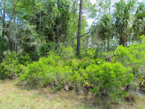 .49 Acre Lot On Highway 19 771781 : Inglis : Levy County : Florida