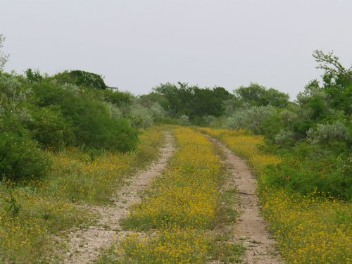 Weekend Get Away, Hunting : Brackettville : Kinney County : Texas
