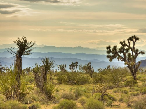 Mtn View Sale Liquidation : White Hills : Mohave County : Arizona