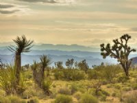 Mtn View Sale Liquidation 4/8 : White Hills : Mohave County : Arizona