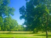 Pecan Lane : Statesboro : Bulloch County : Georgia