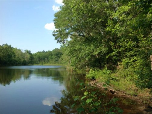 13.5 Acres In Chesterfield, Sc : Mount Croghan : Chesterfield County : South Carolina
