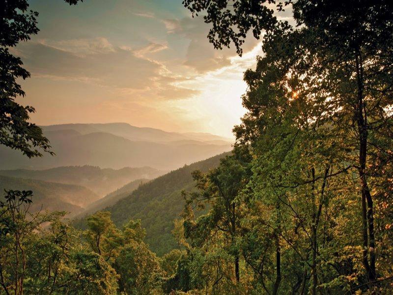 Blowing Rock Mountain Stream : Blowing Rock : Watauga County : North Carolina