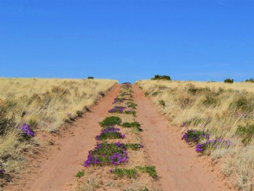 Awesome Land In Witch Wells : St. Johns : Apache County : Arizona