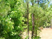 6 Acre Hickory Hill Ranch, Creek