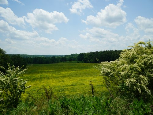 Cleared, Unrestricted Homesite : Crossville : Cumberland County : Tennessee