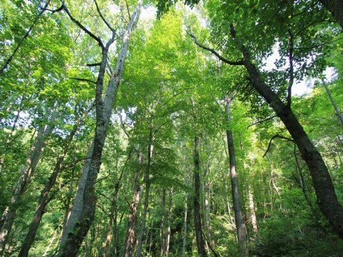 Wooded Tract For Sale In Blue Ridge : Independence : Grayson County : Virginia