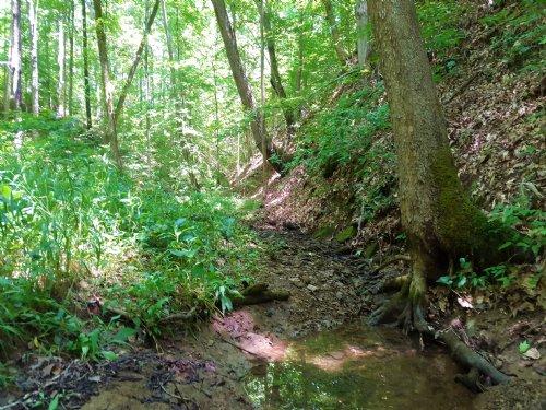 Nice Secluded Property  7.2 Acres : Vinton : Gallia County : Ohio
