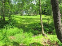 10+ Wooded Acres In Benton : Benton : Columbia County : Pennsylvania