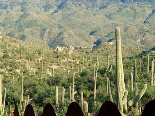 Quiet Canyon Homesite : Tucson : Pima County : Arizona