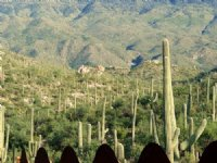 Quiet Canyon Homesite : Tucson : Pima County : Arizona