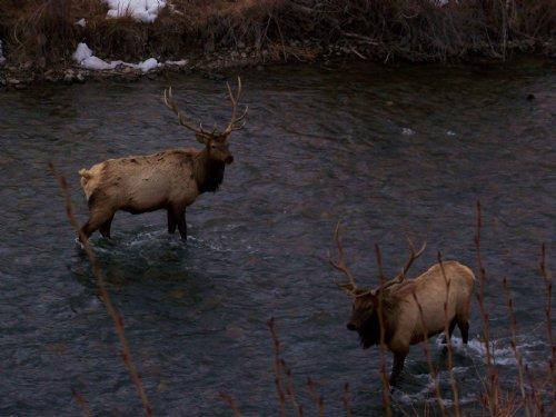 River Ranch : Montrose County : Colorado