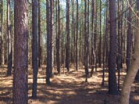 5.9+/-acres Wooded Lot