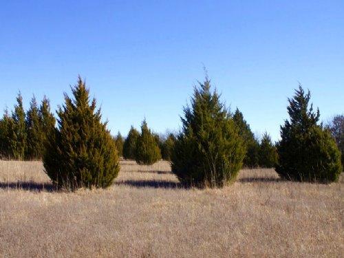 9.89 Acres Montgomery Ranch : Marietta : Oklahoma County : Oklahoma